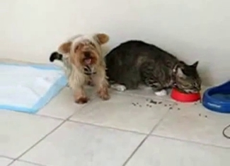 Confused kitten raped by a dog